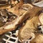 Latem i jesienią Polacy masowo wybierają się do lasów w poszukiwaniu grzybów. Warto posiadać w swoim domu suszarkę, dzięki której przygotujemy suszone grzyby.